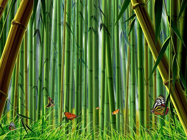 Bamboo Nature8