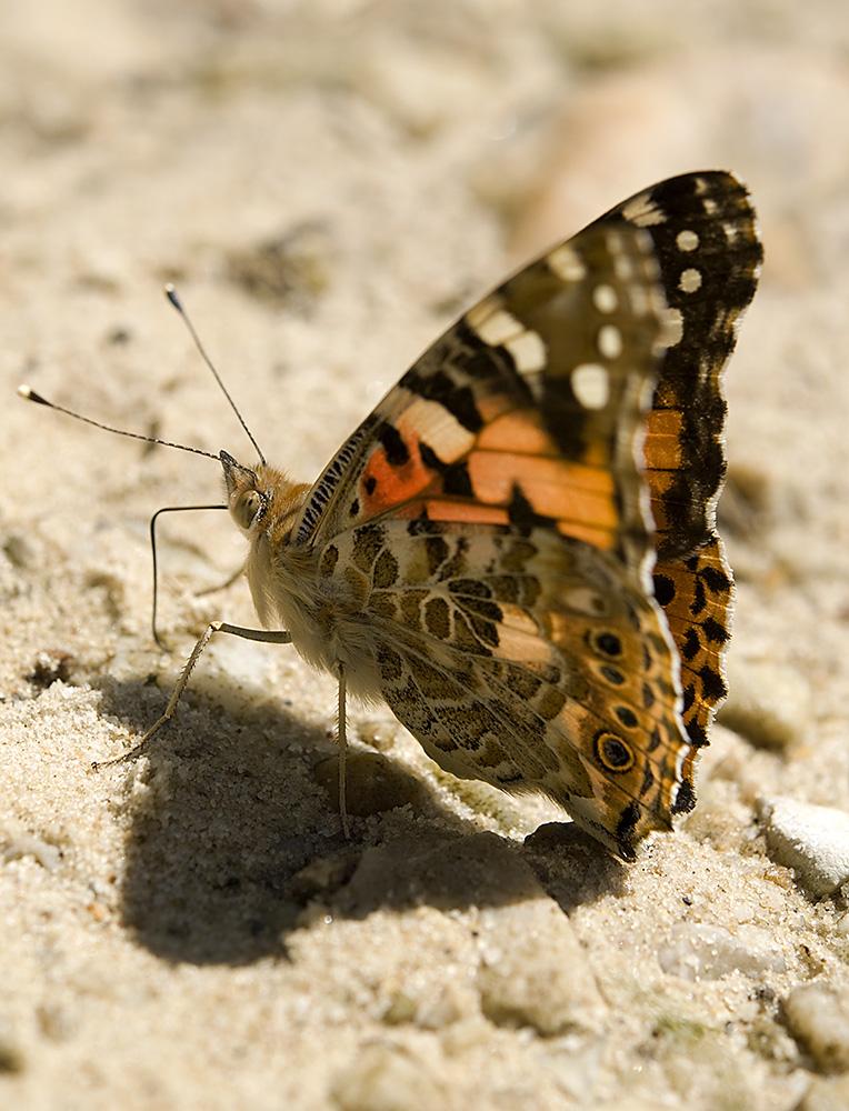 Naturaleza en la villa la mariposa de los cardos for Villas las mariposas