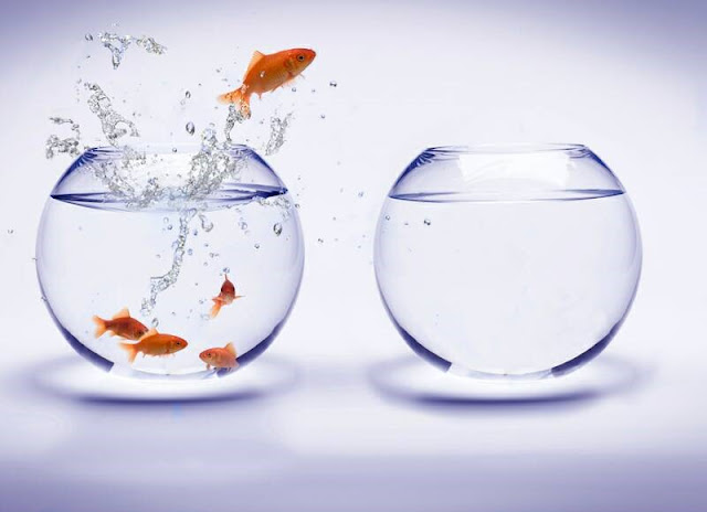 Fishbowl Jump | Kay Kim | Attribution 2.0 Generic (CC BY 2.0) | Source: http://bit.ly/1Q0RzyQ