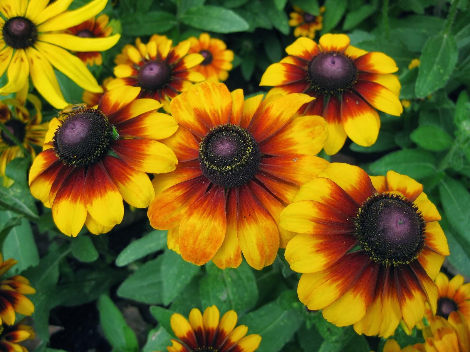 superior summer flowers Part - 2: superior summer flowers home design ideas