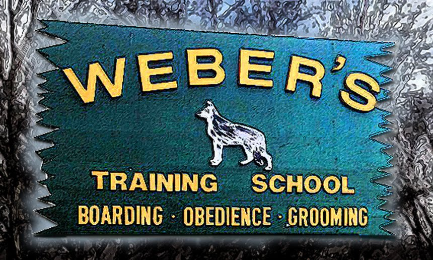 Weber's Boarding Training