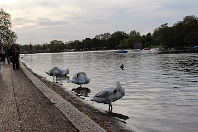 Cisnes Serpentine Hyde Park Londres