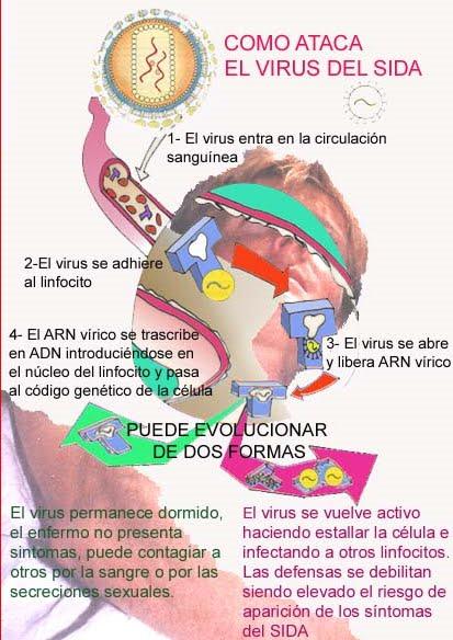 Lucha contra el sida como se transmite el sida for El sida se contagia por saliva