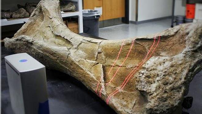 3-D Printed Dinosaur Bone