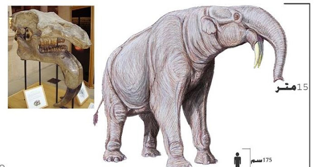 الدينوثيريوم The Deinotherium