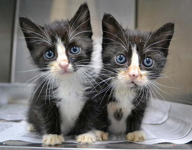 Funny cat pictures part 14, twins kitten