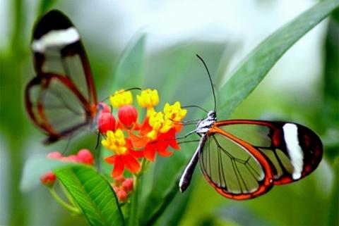 bướm đẹp