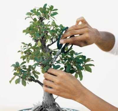 Pruning the Bonsai