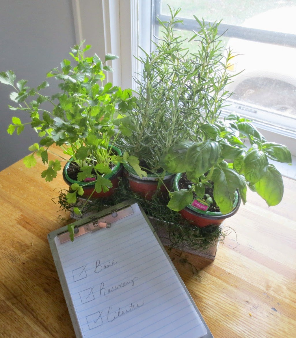 Beyond The Portico Industrial Style Windowsill Herb Garden