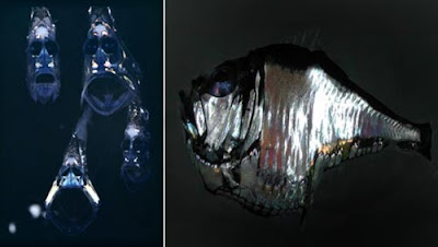 hatchetfish 02 ΔΕΙΤΕ: Τα πιο παράξενα πλάσματα που έχουν βρεθεί στην θάλασσα!
