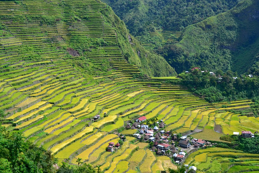 Rice Terraces in Batad Valley