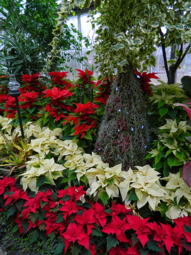 Allan Gardens Conservatory Christmas Flower Show 2013 red white poinsettias by garden muses: a Toronto gardening blog