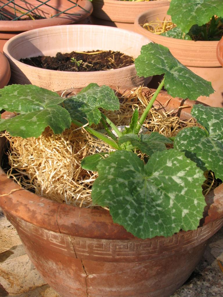 La magia di un piccolo orto l 39 orto senza orto coltivare - L orto in giardino ...