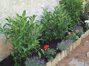 μικρος κηπος