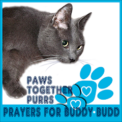 Purrs for Buddy Budd.