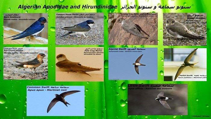 أنواع الطيور في الجزائر