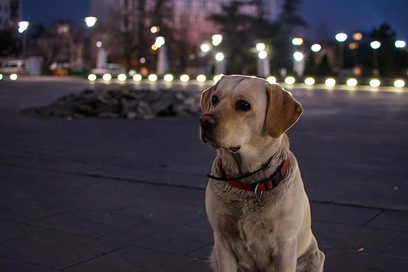 Pas čeka gazdu ispred crkve