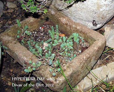 Divasofthedirt,Hypertufa day