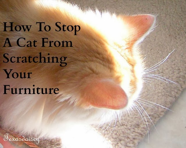 Texasdaisey Creations How To Stop A Cat From Scratching The Furniture