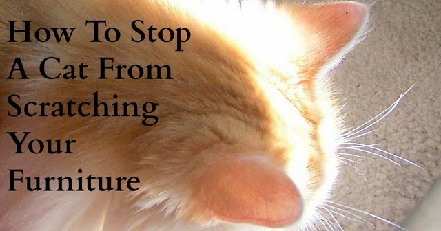 Texasdaisey Creations How To Stop A Cat From Scratching