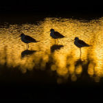 Vögel in Südfrankreich
