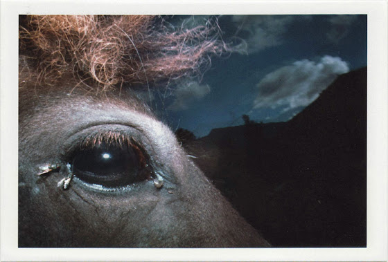 dirty photos - noah's ark fauna photo of horse's eye with flies on it