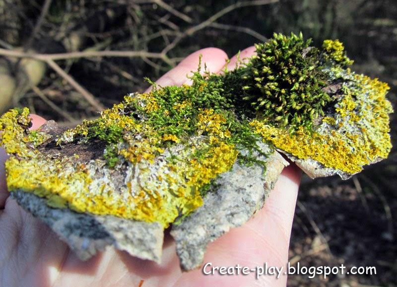 мох в лесу Гатчина
