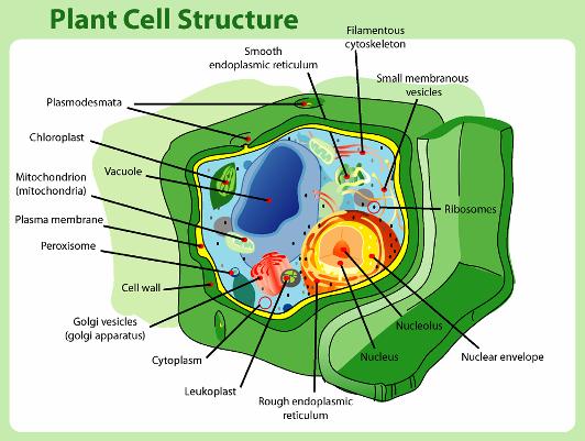 Cabang-cabang Ilmu Biologi