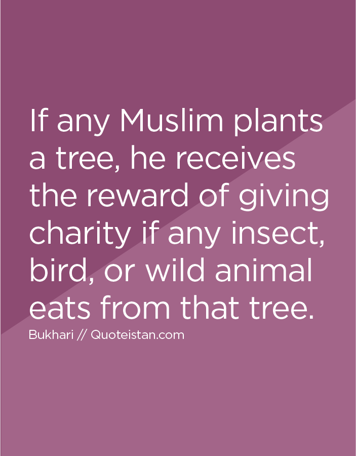 If any Muslim plants a tree, he receives the reward of giving charity if any insect, bird, or wild animal eats from that tree.