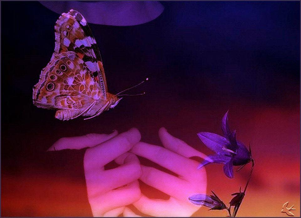 ΤΖΟΥΛΙΑ ΦΟΡΤΟΥΝΗ, Ανθολογία ποιημάτων από την ποιητική συλλογή ΦΥΣΙΚΟ ΑΝΤΙΔΟΤΟ (με ΚΛΙΚ στην εικόνα