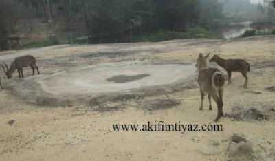 Bukit Gambang Safari Park
