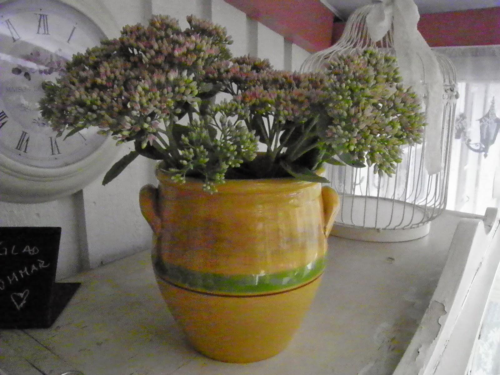 Vitt hus med rosa knutar: blommor i en gul kruka