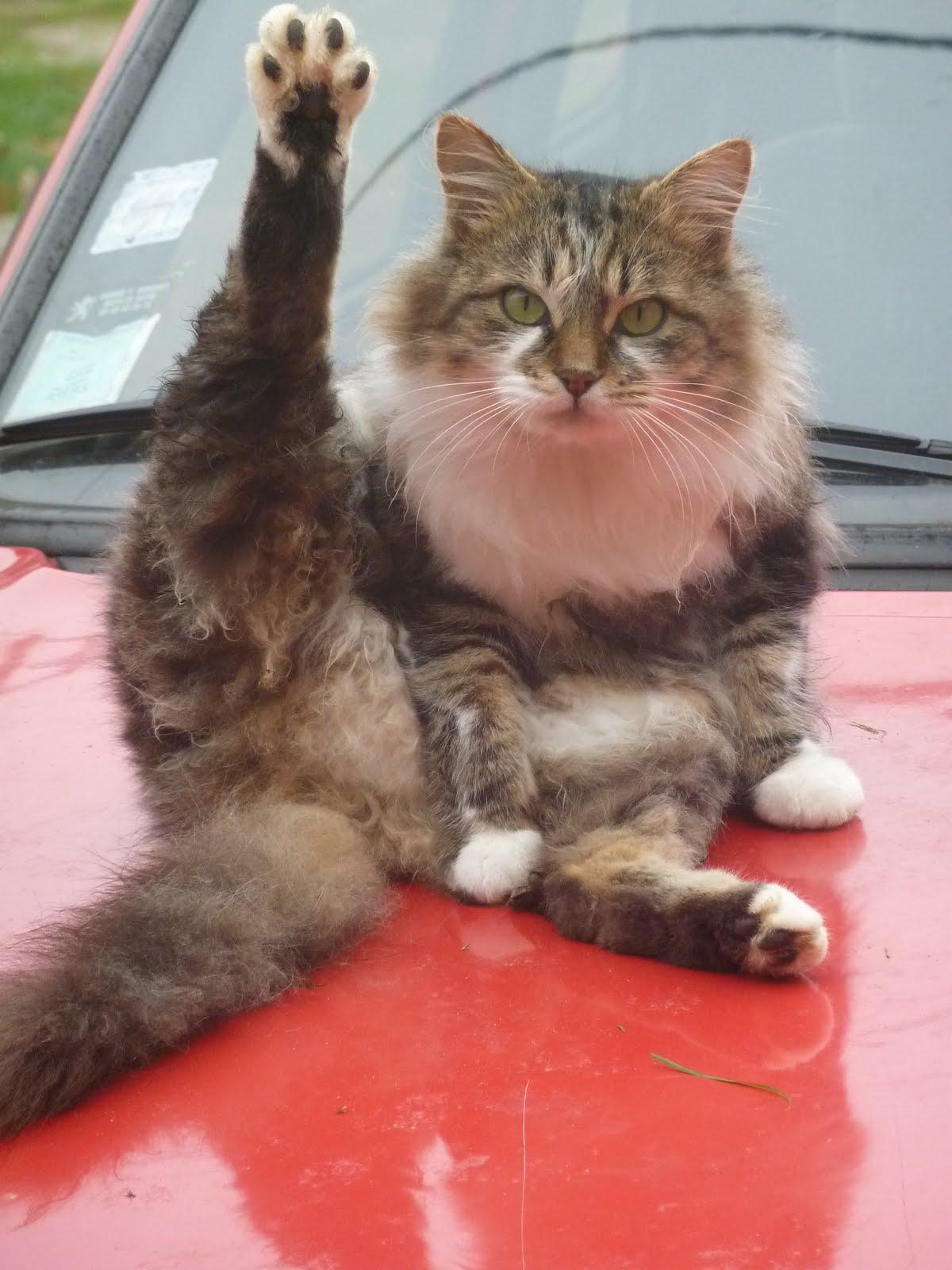 chat cul deinze