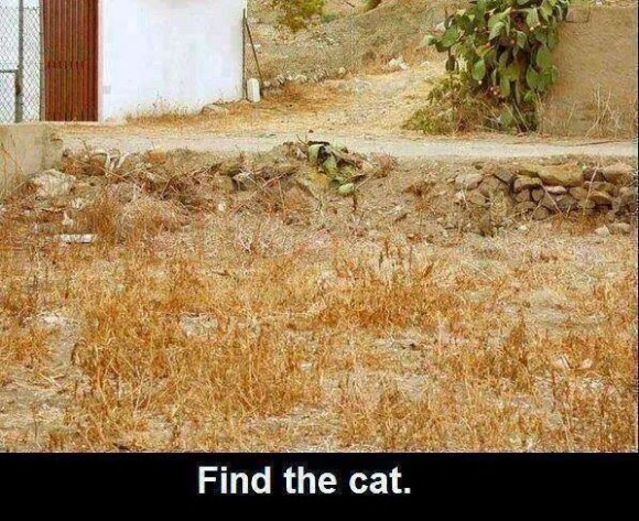Find-the-Cat