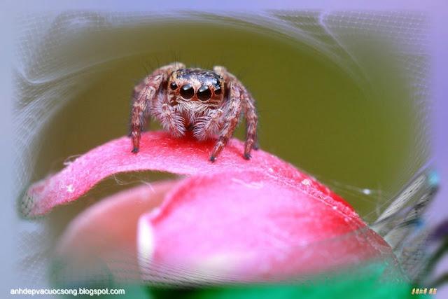 Hình ảnh vẻ đẹp của loài nhện | The beauty of spiders