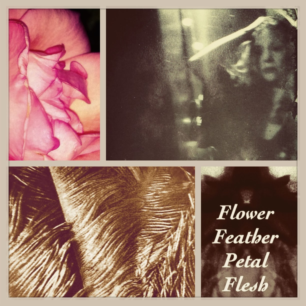 FLOWER FEATHER PETAL FLESH