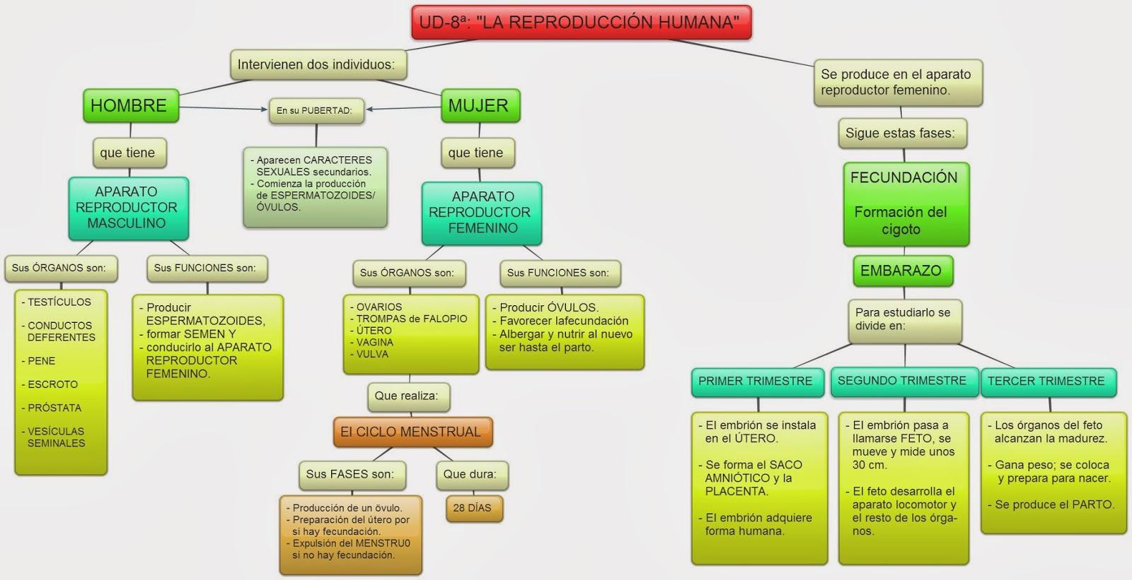AULA6HERENCIA: CONOCIMIENTO DEL MEDIO UD-8ª: \
