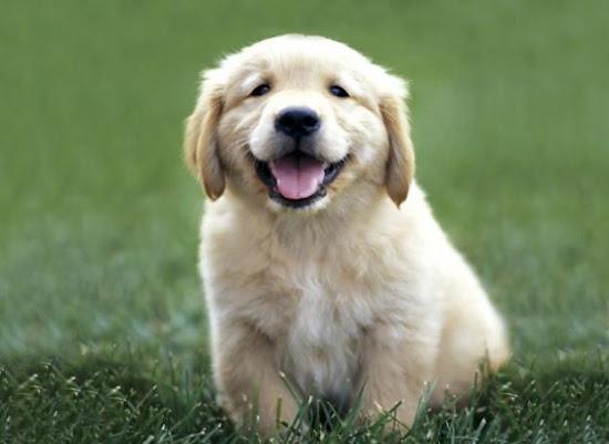 Que significa soñar con un perros ladrando
