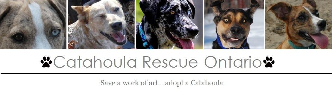 Catahoula Rescue-Ontario Adopt A Dog