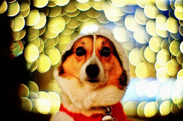 funny santa clause pics