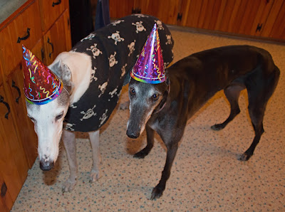 It is Bettina Greyhounds 5th Birthday Today
