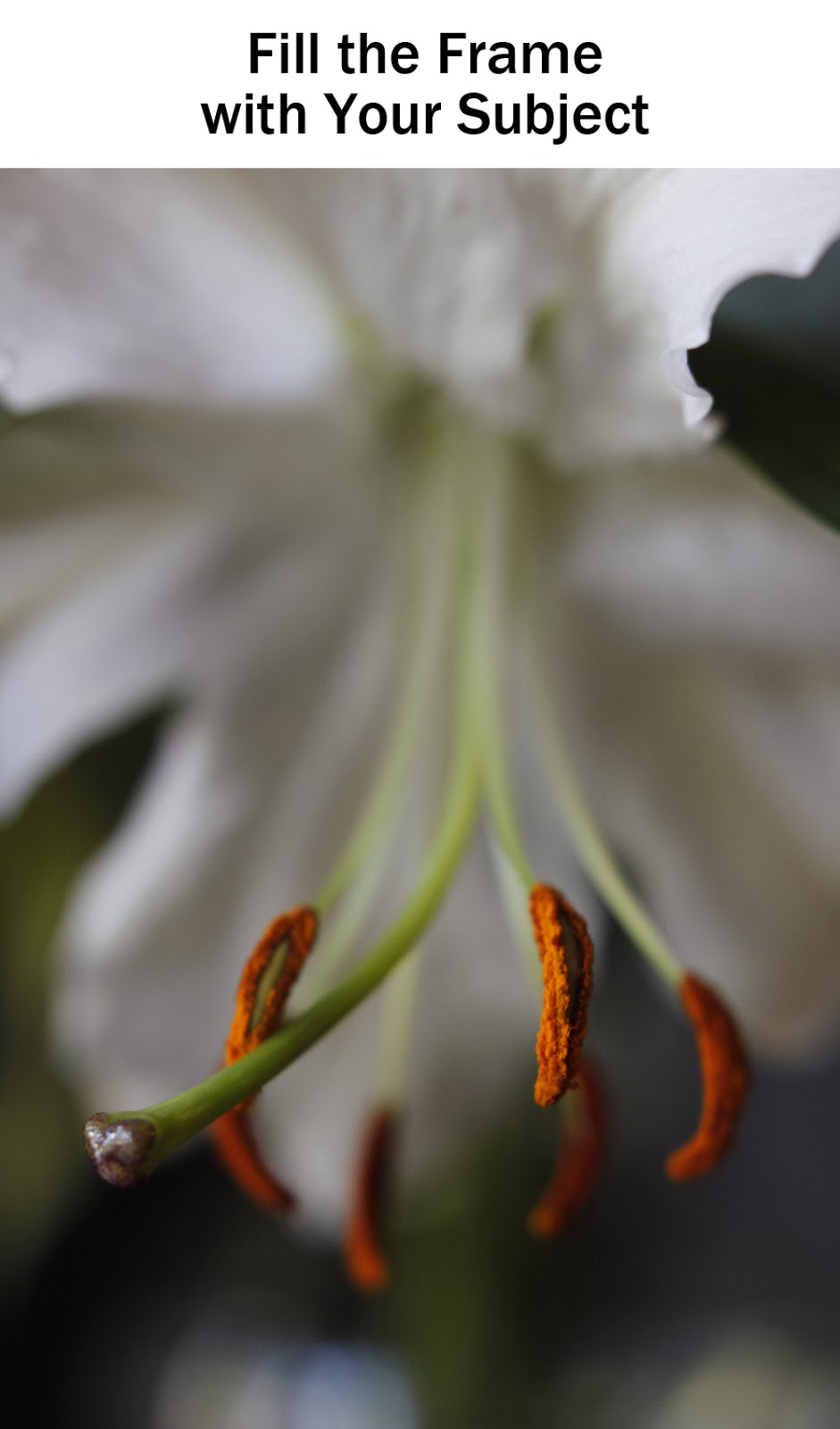 Fill the Frame Macro Lily Photograph | Boost Your Photography