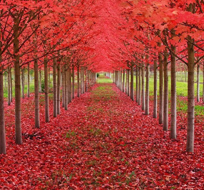 Τα ομορφότερα δέντρα του κόσμου