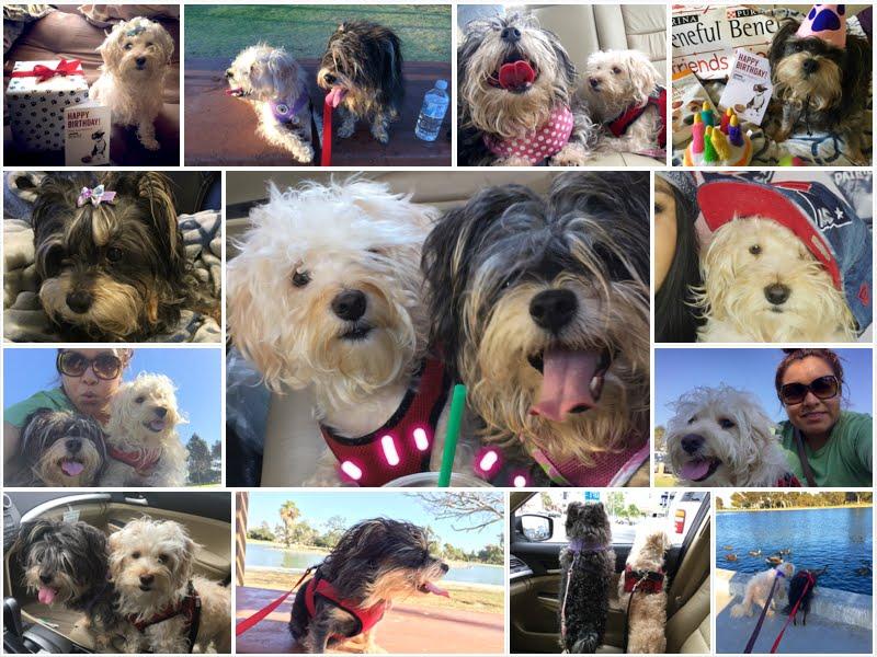 Albergues De Perros Baratos En Miami Beach