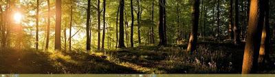Windows 8 Panaromik Ormanlar Teması