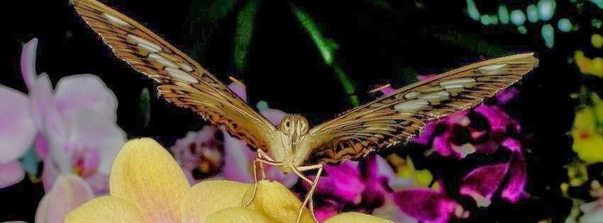 Couverture facebook originale papillons exotiques