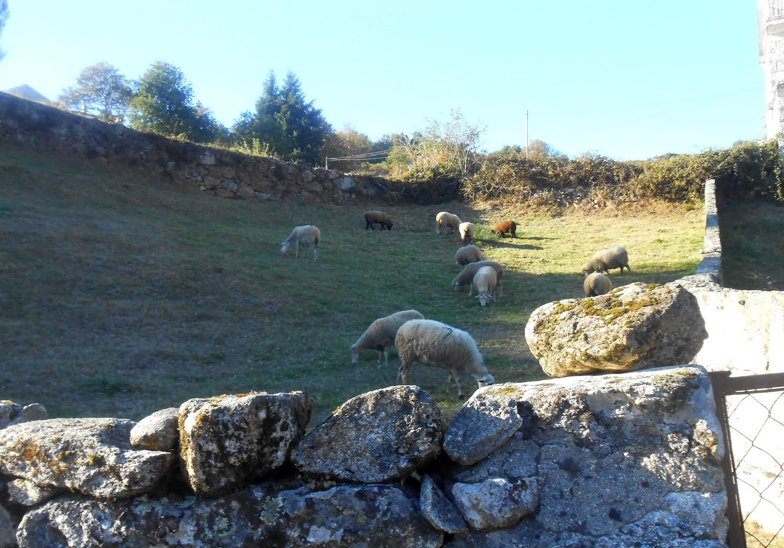 Lamas de Mouro