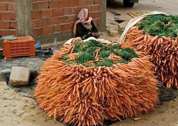 морковь от паразитов отзывы