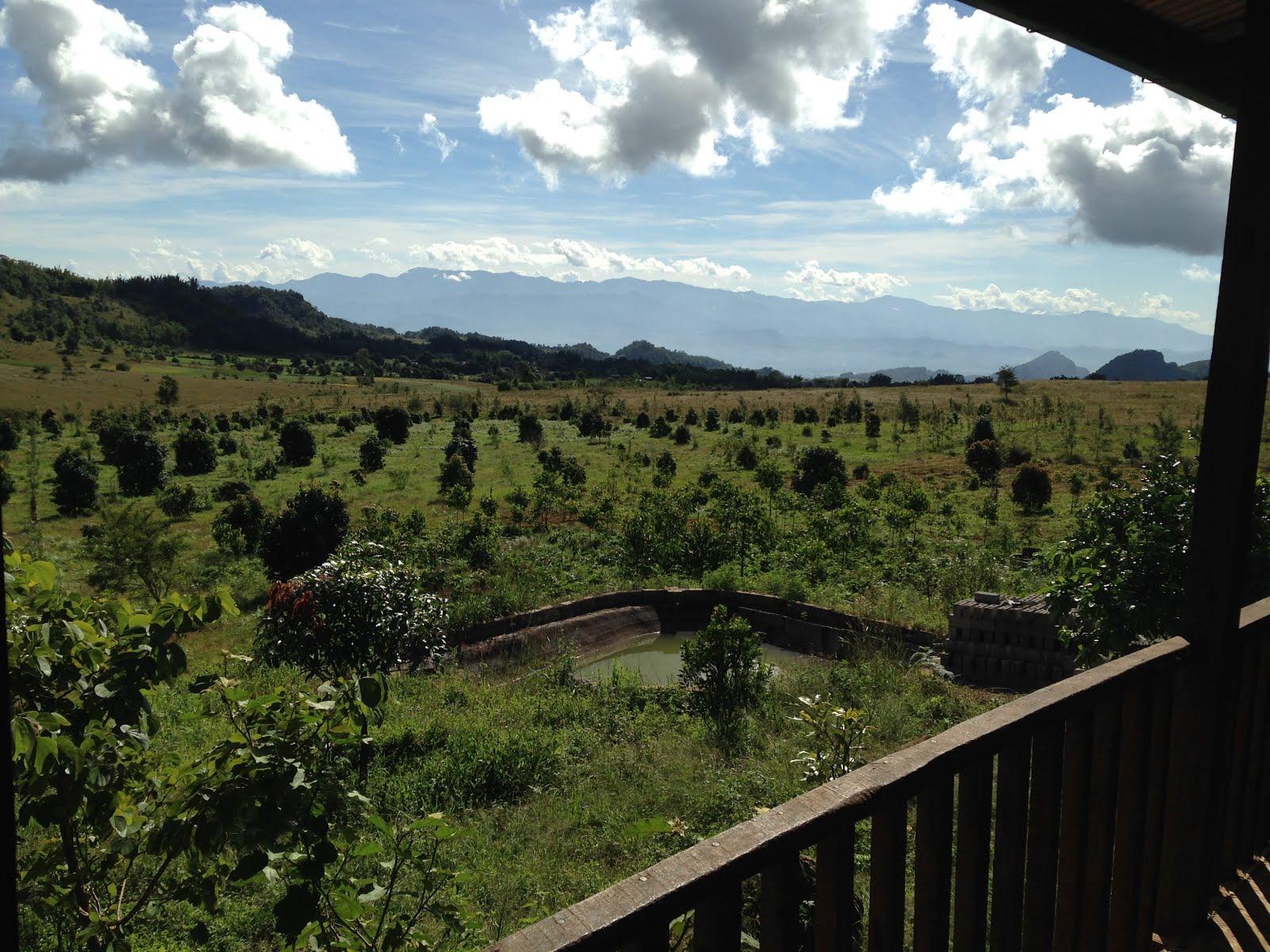 Avocado orchards, Pakhone Village