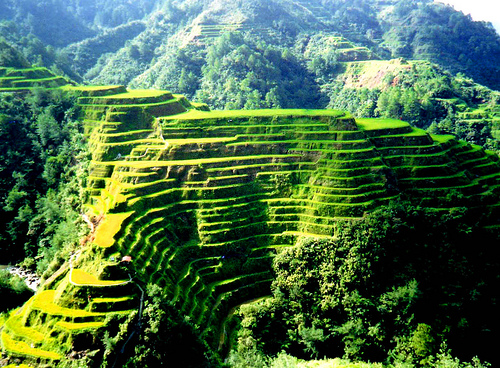 World beautifull places the rice terrace fields of banaue for The terraces 2